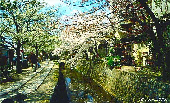 japan_cherry_blossom_1994_0171